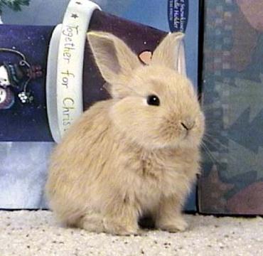 Bunnyhays1